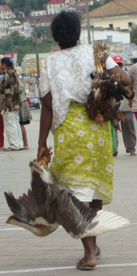 The Women of Madagascar